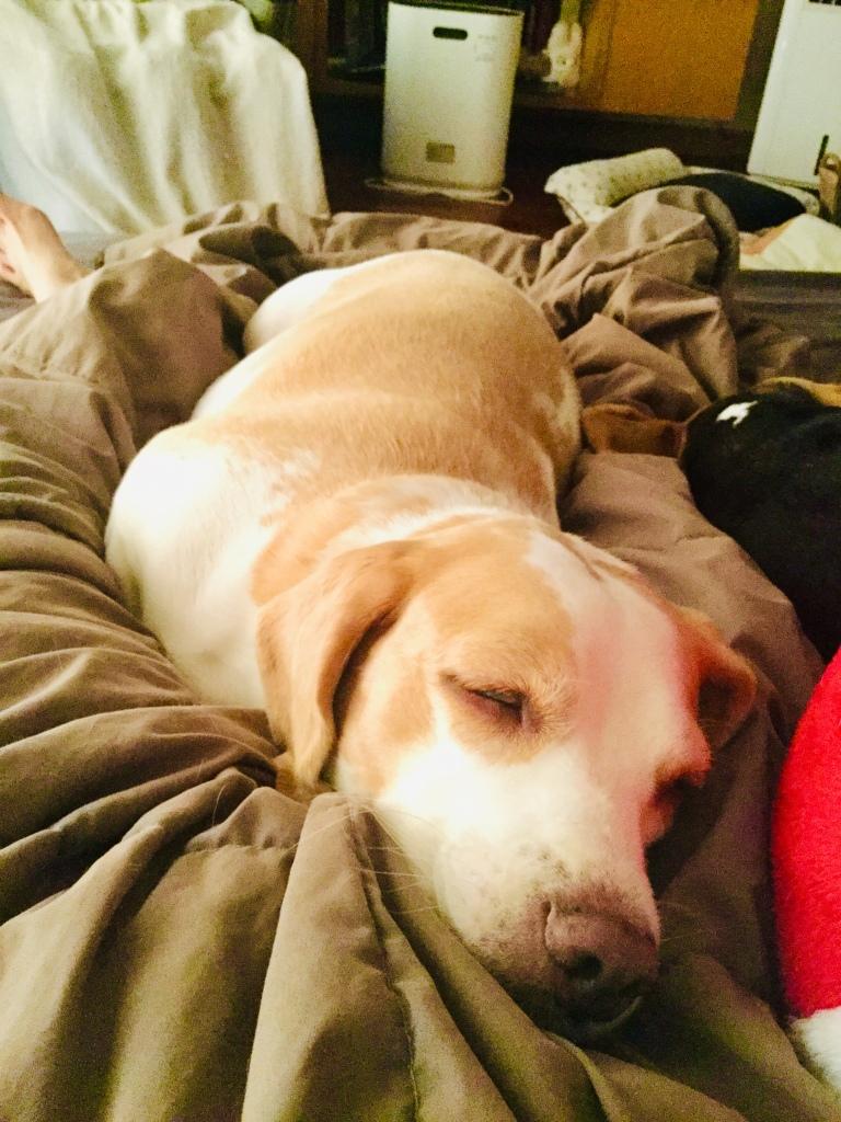 Good Morning Beagle Style